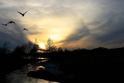 Mallards Silhouette At Sunset Poster