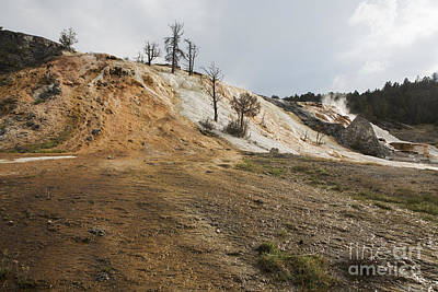 Poster featuring the photograph Mammoth Hot Springs by Belinda Greb