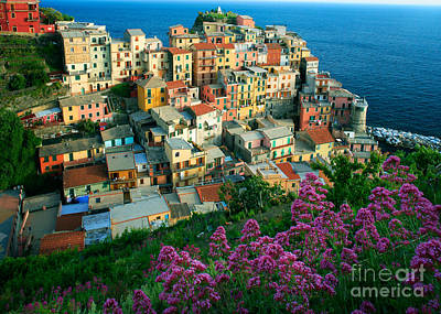 Manarola From Above Poster by Inge Johnsson
