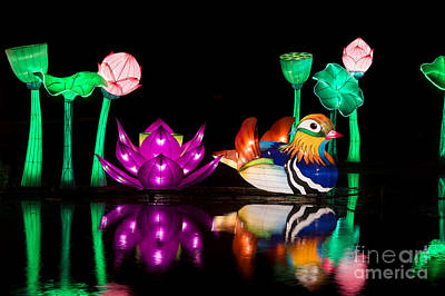Mandarin Duck Chinese Lantern Poster by Tim Gainey