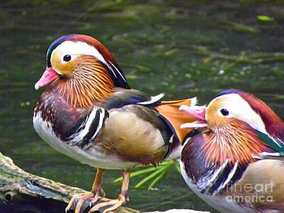 Mandarin Ducks Poster