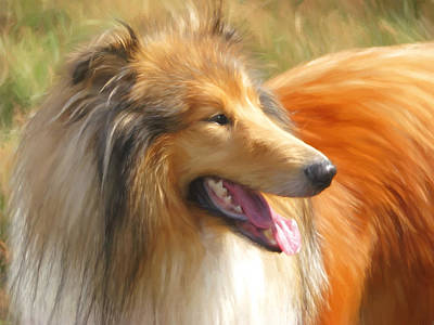Maned Collie Poster by Daniel Hagerman