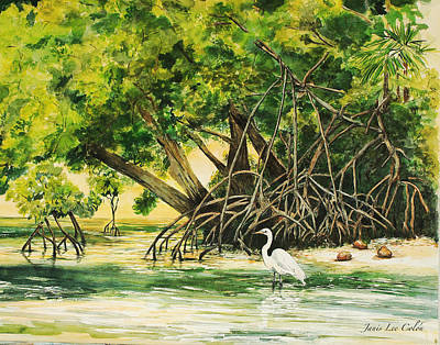 Mangrove Morning Poster