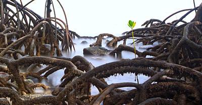 Mangrove Tree Roots Detail Poster by Dirk Ercken