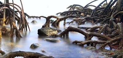 Mangrove Tree Roots Poster by Dirk Ercken