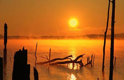 Mantis Sunrise Poster by Roger Becker
