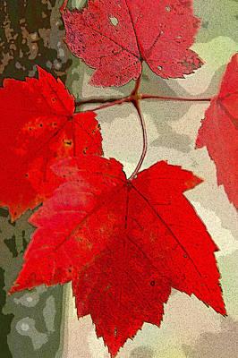 Maple Leaf Display Poster