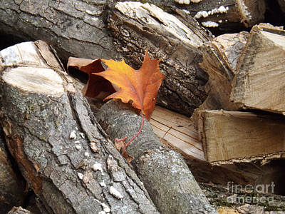 Maple Leaf In Wood Pile Poster by Brenda Brown