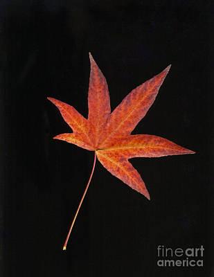 Maple Leaf On Black 2 Poster