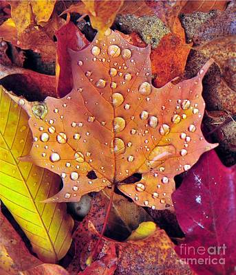 Maple Leaf With Raindrops Poster by Terri Gostola