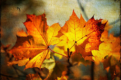 Maple Leaves At Autumn Poster by Jenny Rainbow