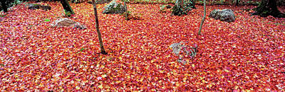 Maple Leaves On The Garden Poster by Panoramic Images