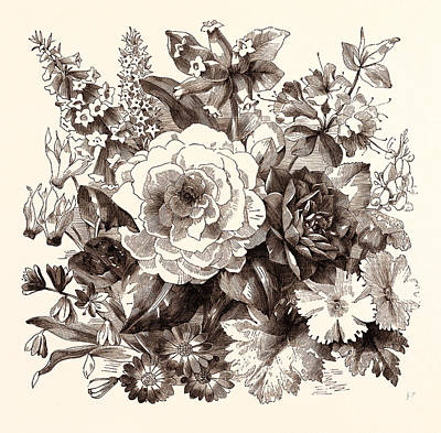 March. Epacris Delicata E. Purpurescens. Cyclamen Persicum Poster by English School