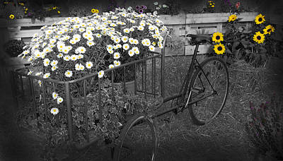Marguerites And Bicycle Poster