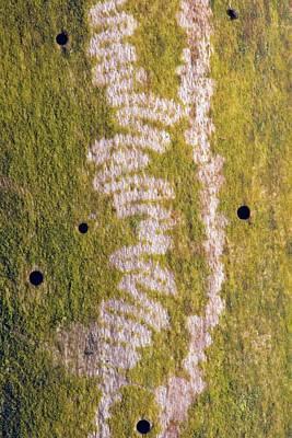 Marks Made By Snail Feeding On Algae Poster