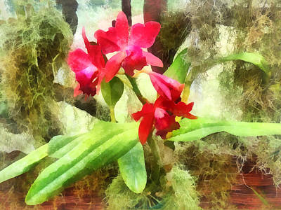 Maroon Cattleya Orchids Poster by Susan Savad
