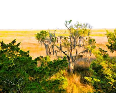 Marsh Cedar Tree And Moss Poster
