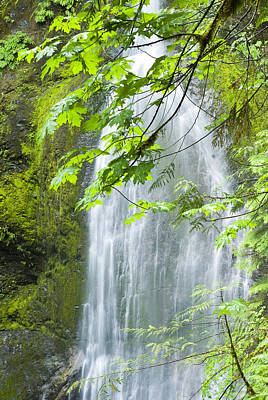 Marymere Falls, Olympic National Park Poster