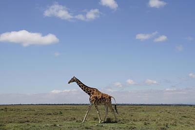 Masai Giraffe On Savanna Masai Mara Poster by Hiroya Minakuchi