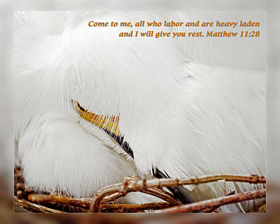 Matthew 11 28 Poster by Dawn Currie