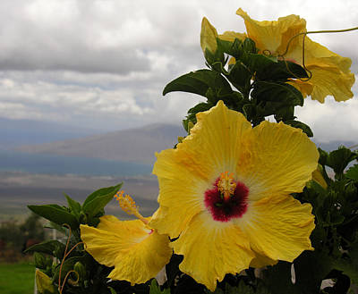 Maui Yellow Hibiscus Poster by Robert Lozen