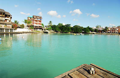 Mauritius, Grand Baie, A Small Teddy Poster