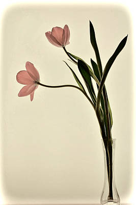 Mauve Tulips In Glass Vase Poster