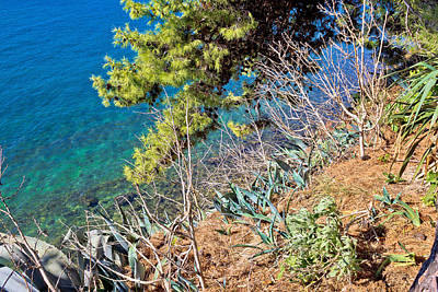 Mediterranean Plants By The Sea Poster by Brch Photography