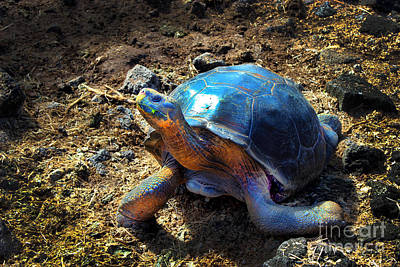 Medium Galapagos Giant Tortoise Poster by Al Bourassa