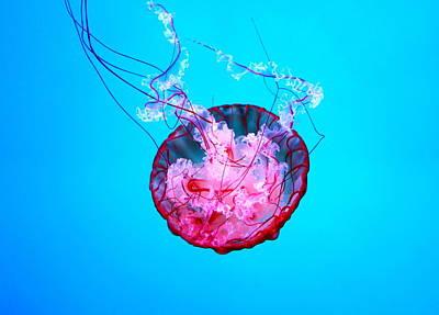 Medusa Poster by Valentino Visentini