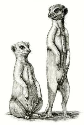 Meerkatte Poster