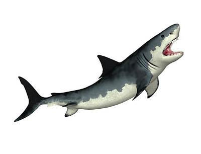 Megalodon Prehistoric Shark Poster by Friedrich Saurer