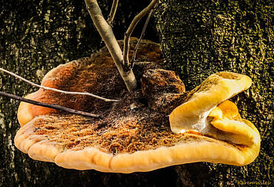 Mellow Mushroom Poster by Karen Wiles