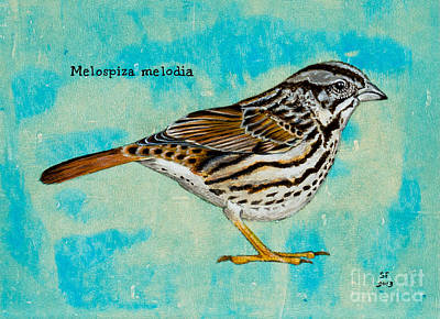 Melospiza Melodia Poster by Stefanie Forck
