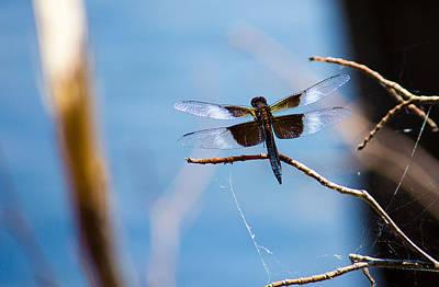 Merrill Creek Dragonfly Poster