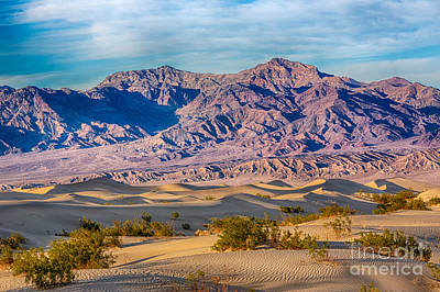 Mesquite Dunes And Mountains Poster