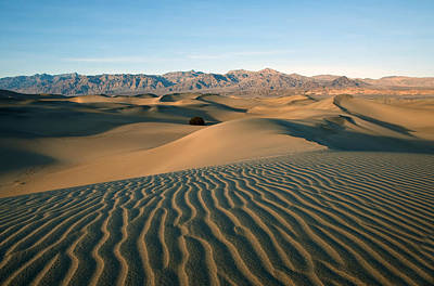 Mesquite Dunes Poster