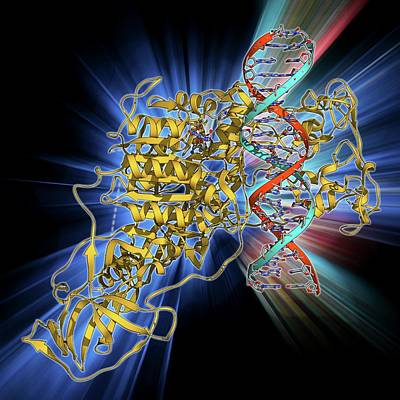 Methyltransferase Complexed With Dna Poster by Laguna Design