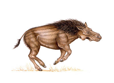 Metridiochoerus Prehistoric Pig Poster by Deagostini/uig