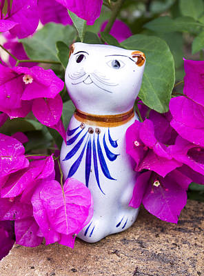 Mexican Cat In Bougainvillea Poster