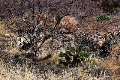 Mexican Grey Wolf Desertscape Poster by Barbara Chichester