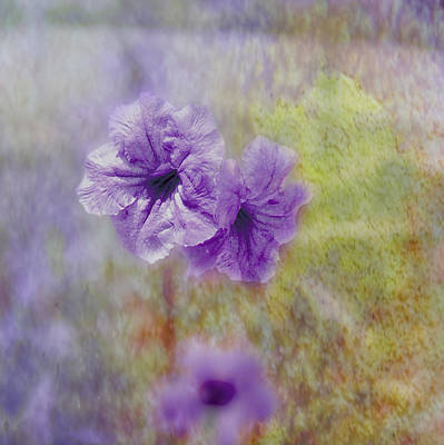 Poster featuring the photograph Mexican Petunia by Judy Hall-Folde