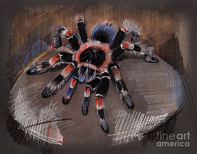 Mexican Redknee Tarantula Poster