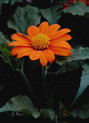 Poster featuring the photograph Mexican Sunflower by James C Thomas