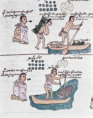 Mexico Codex Mendoza Poster