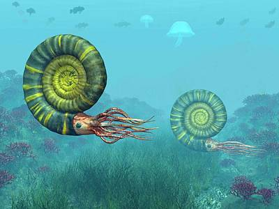 Middle Jurassic Ammonites Poster by Walter Myers