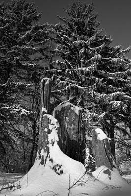 Poster featuring the photograph Midwest Sequoia by Ed Cilley