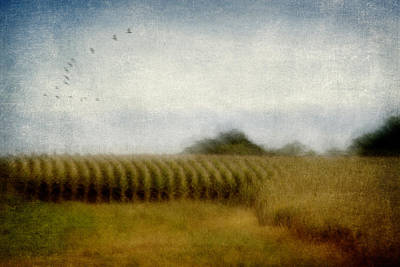 Midwestern Drive-by Corn Fields Poster by Carol Leigh