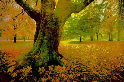 Autumn Splendor Poster by Bonnie Bruno