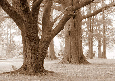 Poster featuring the photograph Mighty Oaks by Jim Whalen
